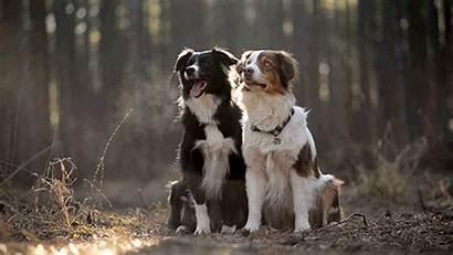 Gifs Dogs Hug Hugs Dog Animal Gifdump
