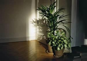 Pot De Fleur Interieur Design : fond d 39 cran fen tre chambre les plantes ombre mur ~ Premium-room.com Idées de Décoration