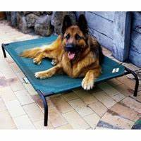 coolaroo raised dog bed from gbp2657 With what size dog bed for german shepherd