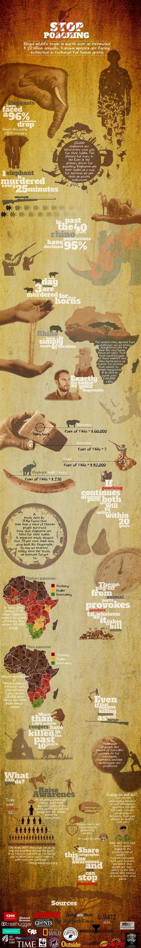 Stop Poaching Infographic Ecogreenlove