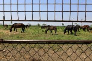 horse slaughter slaughtering slaughterhouses ban meat slaughterhouse taste does horses lifts ignited congress debate clear way ibtimes boddy peter horsemeat