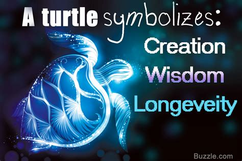 Symbolic Meaning Of Turtles In Different Culture