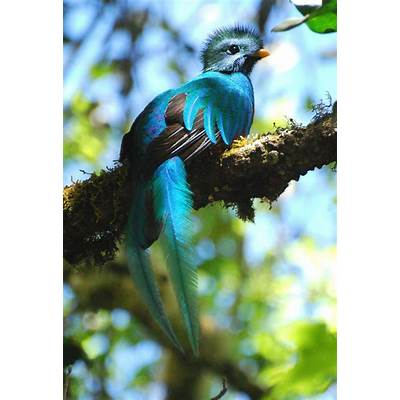 Quetzal BirdColor - Blue & GreenPinterest
