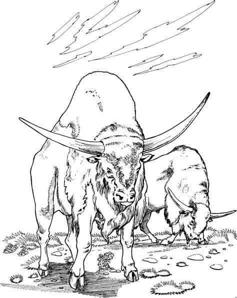 stiere ausmalbild malvorlage tiere