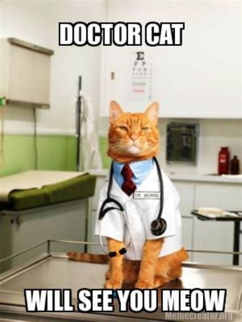 Doctor Appointment Meme - caturday doctor cat and more cats vs cancer