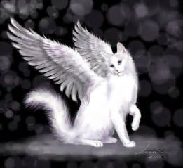 cats with wings wingedclan clan of winged cats sing ups unofficial