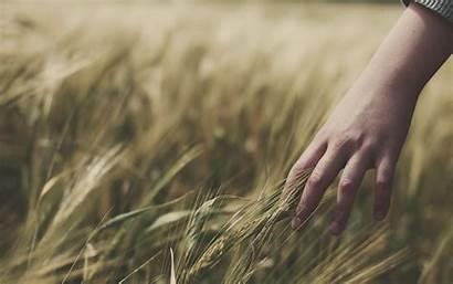 Wallpapers Feeling Grass Hand Hands Feelings Wheat