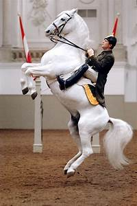 Morning Training At The Spanish Riding School