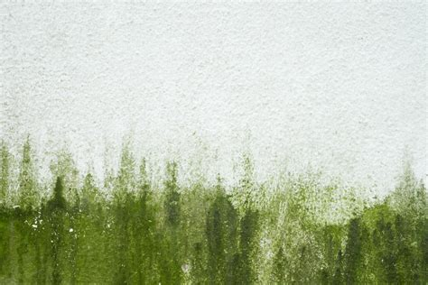 flechten entfernen soda algen entfernen hausmittel gallery of algen entfernen