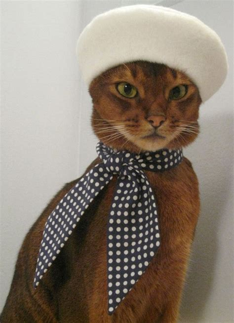cat clothing top 10 cutest animals of 2012 cats adorable dogs