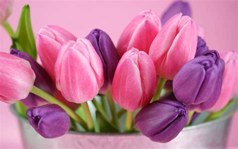 Wallpaper Of Tulip by Wallpapers Purple Tulips Flowers Wallpapers