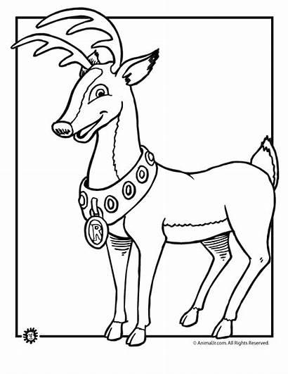 Rudolph Coloring Pages Reindeer Nosed Deer Christmas