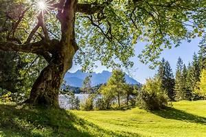 Baum Am Wasser : baum am barmsee foto bild wasser b ume sonne bilder ~ A.2002-acura-tl-radio.info Haus und Dekorationen