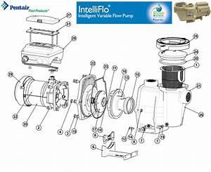 Intelliflo Vf Pump Replacement Parts