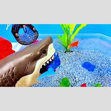 Learn Sea Animals Names For Children Toddlers Babies Learning Colors With Water Animal Toys For