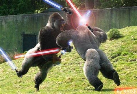 Gorilla Warfare Meme - tmp quot who makes 15mm yemeni hoochie rebels quot topic