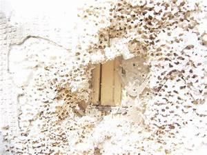 Ameisen Im Haus Woher : bauen wohnen garten familienleben ~ Lizthompson.info Haus und Dekorationen