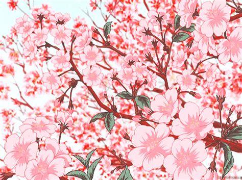 Bibit Collagen Japanese Cherry scenery cherry blossom g ouran tree ohshc