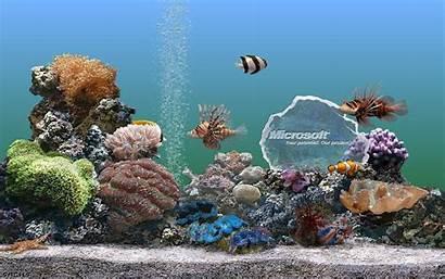 Aquarium Screensaver Desktop Wallpapers Marine Computer Walldevil