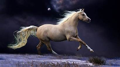 Wallpapers Horses Running Pixelstalk