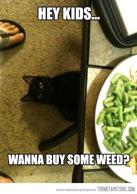 Hilarious Weed Memes - funny weed memes 28 images funny stoner meme funny weed meme weed memes 20 most funny weed