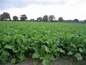 Fodder crops - W.E. Jameson & Son