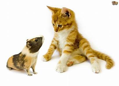 Pets Furry Cats Together Safely Pet Pets4homes
