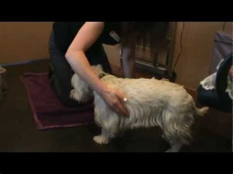 Calgary Vet shows Tui Na massage Techniques on a dog, a