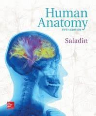 Human Anatomy 4th edition | Rent 9780073378299 | Chegg.com