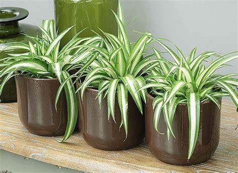 les plantes qui d 233 polluent les maisons senior active