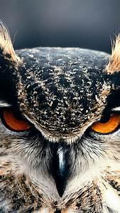 Wallpaper, Owl, 4k, Hd, Wallpaper, Eyes, Wild, Nature, Gray
