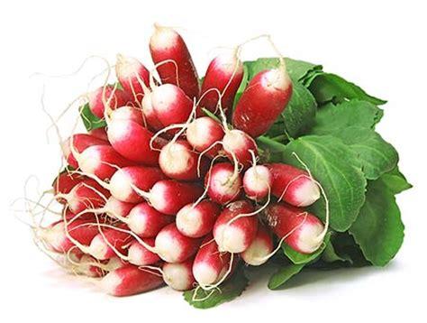 cuisine et terroirs les radis roses priméale