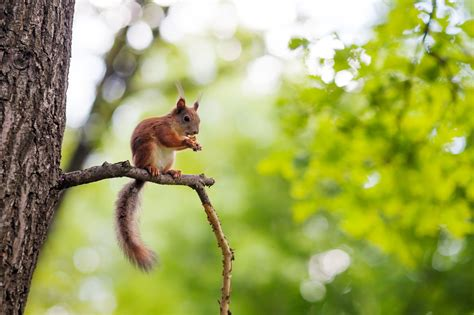 facts  squirrels