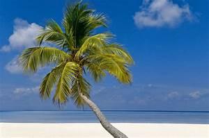 La Palma Jardin : s cale el jugo a tus palmeras ~ A.2002-acura-tl-radio.info Haus und Dekorationen