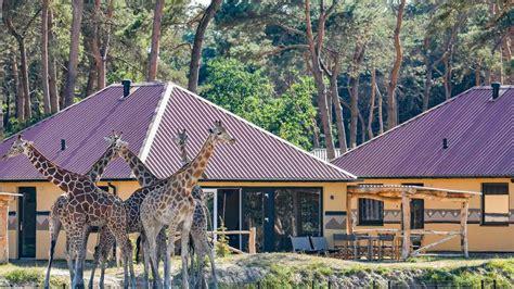 safari resort beekse bergen vakantieparknederlandnl