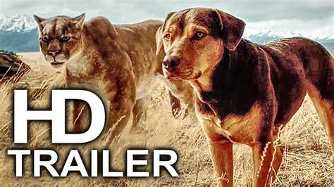 dogs  home trailer    adenture family