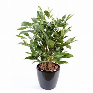 Fausse Plante Verte : dracaena surculosa pot plante artificielle fleurs plantes artificielles ~ Teatrodelosmanantiales.com Idées de Décoration