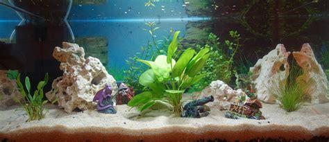 mise en eau aquarium photos d aquarium page 86