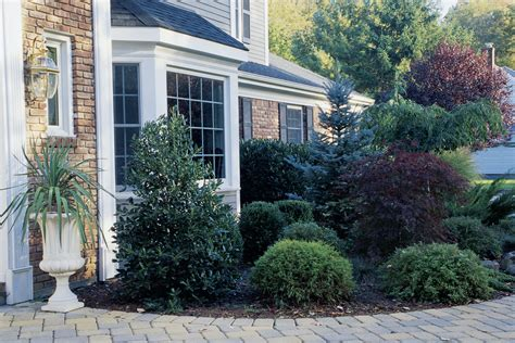 Good Ornamental Trees For Planting Close To Houses Home