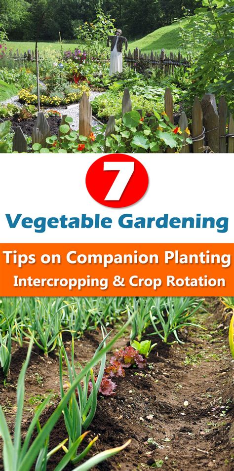 gardening web 7 vegetable gardening tips on companion planting intercropping crop rotation balcony garden web
