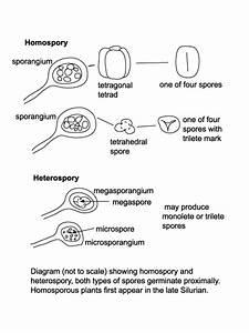 Spores And Pollen