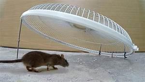 Electric Fan Guard Mouse  Rat Trap