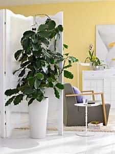 Pflanzen Für Wohnzimmer : gdzie stawia kwiaty w doniczkach tag zdj cia ~ Markanthonyermac.com Haus und Dekorationen