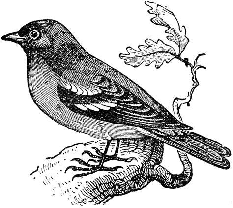 sparrow clipart black and white sparrow clipart etc