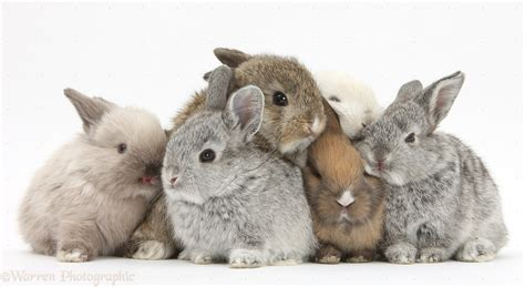 Image result for baby bunnies