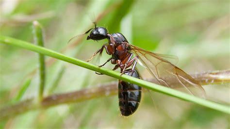 was fressen ameisen termiten im haus termiten essen holz stockfoto bild 49354385 bambus technisches ueber bambus