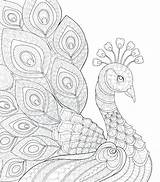 Peacock Coloring Pages Adults Drawing Garden Colour Adult Getdrawings Printable Getcolorings Pea Paintingvalley Colorings sketch template