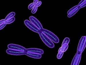 Chromosomes  Artwork Photograph By Sciepro