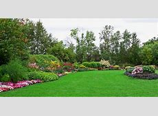 Expert gardening tips for July roses, perennials, lawn