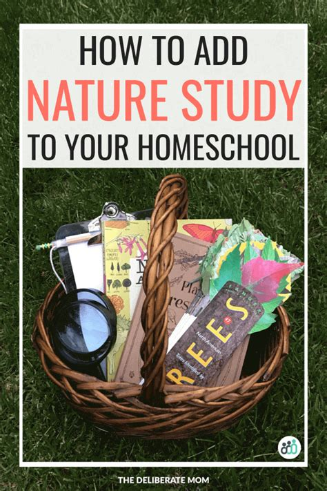 How to Add Nature Study to Your Homeschool